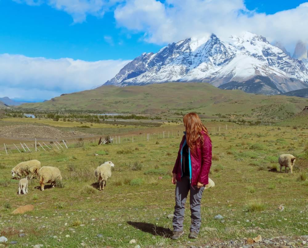 הרים וכבשים בצ'ילה