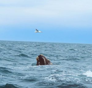 לוויתן וציפור