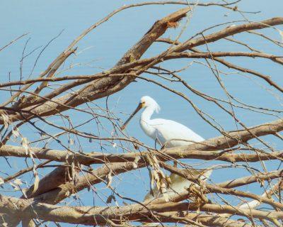 ציפורים ושקנאים