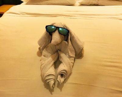 כלב ממגבת