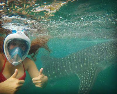 כריש לויתן ואני