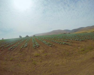 נופים חקלאיים