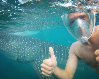 שחיה עם כרישי לויתן