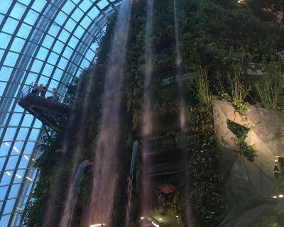יער גשם מלאכותי